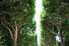 Row of trees Royalty Free Stock Photos