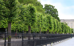Row of trees and long fence Stock Photos
