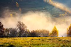Row of trees on the meadow in morning fog Stock Photography