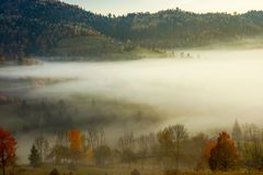 Row of trees on the meadow in morning fog. Row of trees on the meadow in morning autumn fog. beautiful background of forested rolling hill in the distance Royalty Free Stock Images