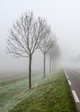 Row of trees in the mist along the road Stock Photo