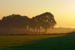 Row of trees during misty sunrise. In agricultural landscape Royalty Free Stock Photo
