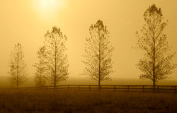 Row of trees in morning haze. Stock Photography