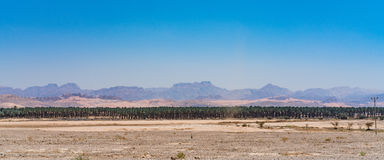 Row of trees. Nice panoramic view Row of trees near Eilat city in Israel Stock Image