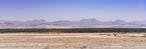 Row of trees. Nice panoramic view of Row of trees near Eilat city in Israel Royalty Free Stock Image