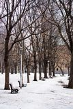 A row of trees and park benches in winter. Surrounded by snow Royalty Free Stock Images