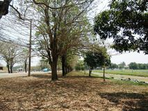 Row of trees in park, beside of street. On sunny day stock images