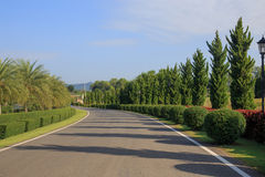 Row of Trees with road. Royalty Free Stock Photos