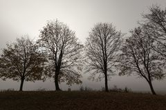 Row of trees. In the morning during a fog. Autumn landscape Stock Images