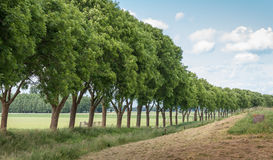 Row of trees in a rural landscape Stock Photos