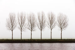 Foggy trees Stock Images