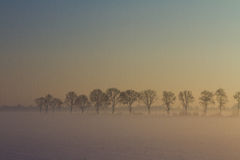 Row of trees in snow, fog and sunset Stock Photos