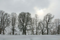 Row of trees on a snowy gray winter day Royalty Free Stock Photography