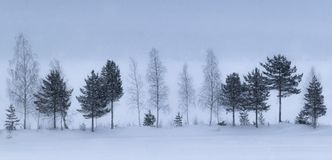 Row of trees on a snowy winter landscape stock photo