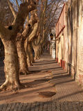 Row Of Trees On Street Royalty Free Stock Photo