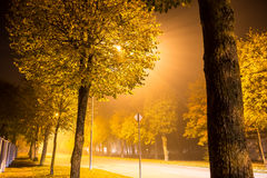 Row of trees and streetlights on a foggy suburban street Stock Images