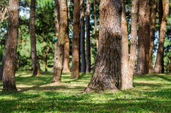 Row of trees Stock Photography