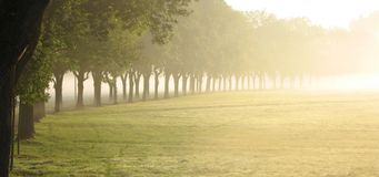 Row of trees at sunrise. A country road with trees growing along it, sunrise light coming from the background Stock Images