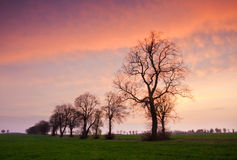 Row of trees at sunset Stock Images