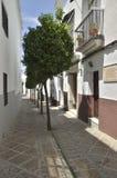 Row of trees in white street Stock Photo