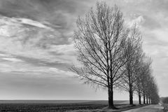 Row of trees in winter Stock Image