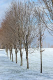 Row of trees in winter. Row of deciduous trees on a clear day in early winter Royalty Free Stock Photos