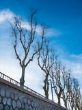 Row of trees in winter. Row of trees without leaves in winter on a sunny day Royalty Free Stock Photos