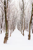 Row of trees during winter storm Stock Photo