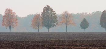 A row of trees with yellow and red leaves in the middle of the field against the background of a misty forest royalty free stock image