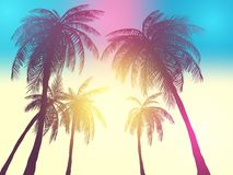 Row of tropic palm trees against sunset sky. Silhouette of tall palm trees. Tropic evening landscape. Gradient color. Vector illus. Tration. EPS 10 vector illustration