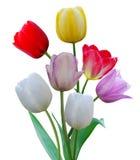 Row tulip flowers
