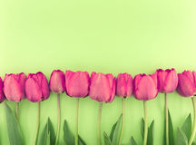 Row of tulips on green background with space for message. Stock Photos