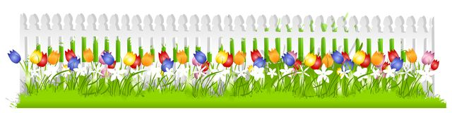 Row Tulips White Picket Fence. A background border featuring a row of colourful spring tulips in the grass growing along a white picket fence Stock Photos