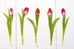 Row of tulips on wooden background. Holyday background. Top view. Row of tulips on wooden background. Holyday background. Top view Stock Photos