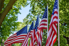 Row of US flags waving outside at outdoor park with trees in background. Red white and blue flags patriotically standing outside on American holiday Stock Photography