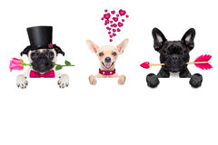 Row of valentines dogs in love Stock Image
