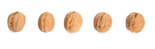 Row Of Walnut Nut III Royalty Free Stock Photography
