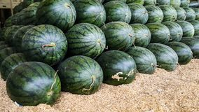 Row of watermelon on the rice husk Stock Images