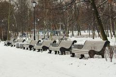 Benches in the park. A row of white benches in the park Royalty Free Stock Photo