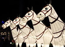 Row of white horses Royalty Free Stock Photos