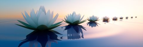 Closeup of lotus flowers in a calm sea at sunset vector illustration