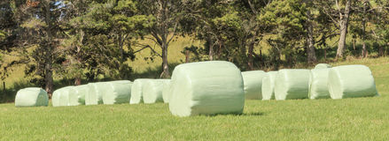 The row of white plastic wrapped silage on green farm in harvest Royalty Free Stock Photography