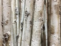 A row of white tree trunks background Royalty Free Stock Photo