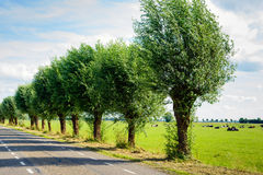 Row of willow trees beside a country road Stock Photo