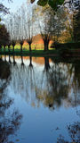 Row of willows reflected in water Royalty Free Stock Photo