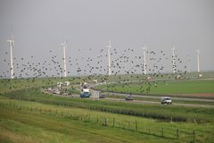 Row of Wind turbine along the shore of the IJsselmeer with walking bridge to it. In Flevoland with birds and highway Stock Photo
