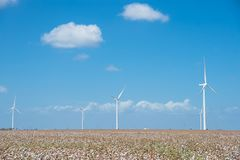 Wind turbines farm on cotton field at Corpus Christi, Texas, USA Royalty Free Stock Photo