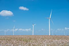 Wind turbines farm on cotton field at Corpus Christi, Texas, USA Royalty Free Stock Image