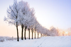 Row of winter trees with pale sunset Stock Photo