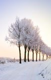 Row of winter trees with pale sunset. Lovely scenic winter landscape with a row of trees at sunset Royalty Free Stock Photography